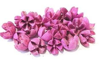 csillagrozsa-lila-hobbykreativ