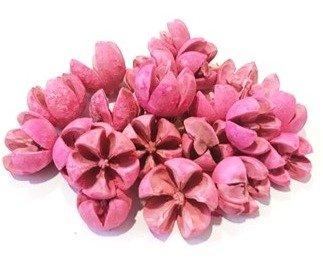 csillagrozsa-pink-hobbykreativ
