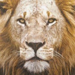 szalveta-oroszlan