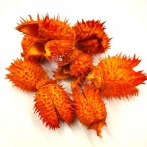 Beléndek narancssárga szárított termés 8 gr