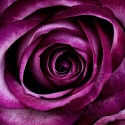 Polifoam rózsa virágfej