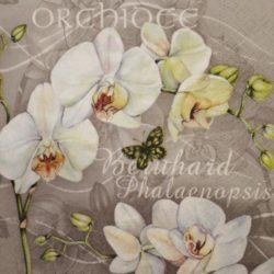 Orchideás szalvéták