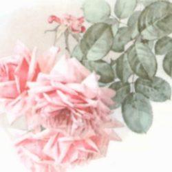 dekorszalveta-summer-roses-hobbykreativ