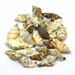 vizicsiga-haz-bézs-barna-hobbykreativ