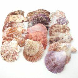 fesukagylo-vegyes-szinu-hobbykreativfesukagylo-vegyes-szinu-hobbykreativ