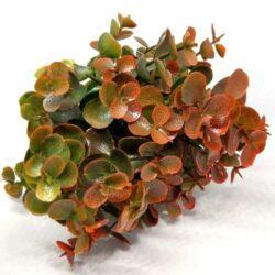 muanyag-eukaliptusz-rozsdas-zold-diszito-hobbykreativ