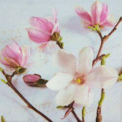 dekorszalveta-magnolia-hobbykreativ