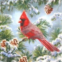 dekorszalveta-kardinalispinty-havas-fenyon-hobbykreativ