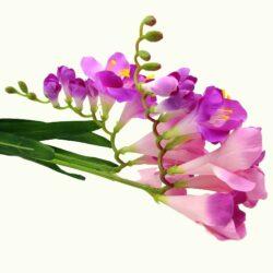 selyem-krokusz-orchidea-csokor-ciklamen-hobbykreativ