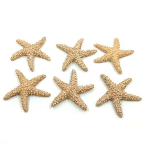 ontapados-tengeri-csillag-szett-homokszinu-hobbykreativ
